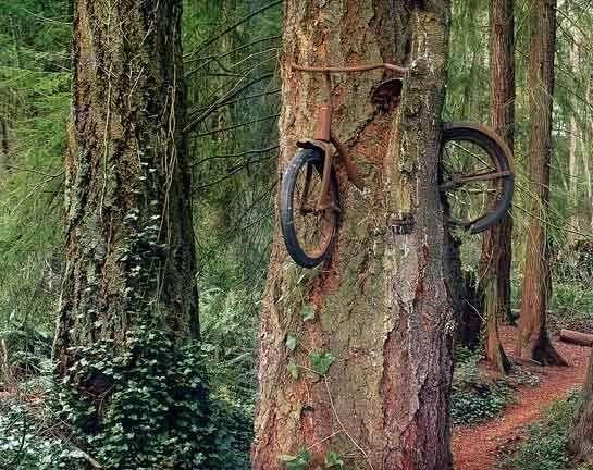 La bicicletta mangiata dall'albero