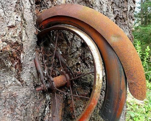 bici nell'albero ruota