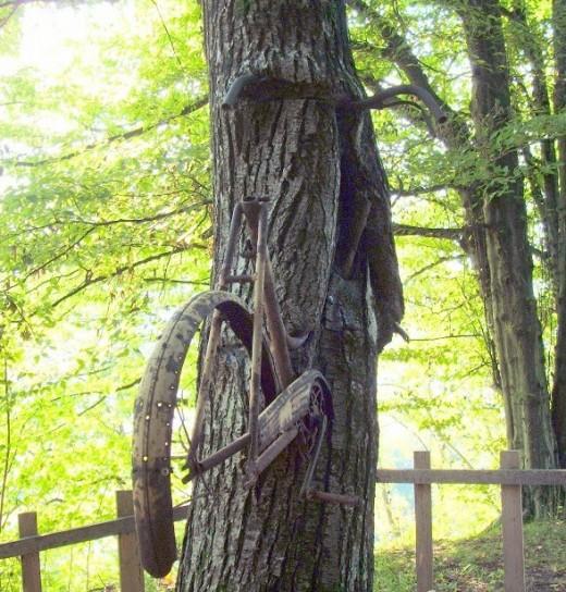 bici nell'albero retro