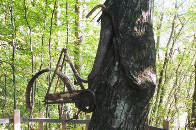 bici nell'albero bosco