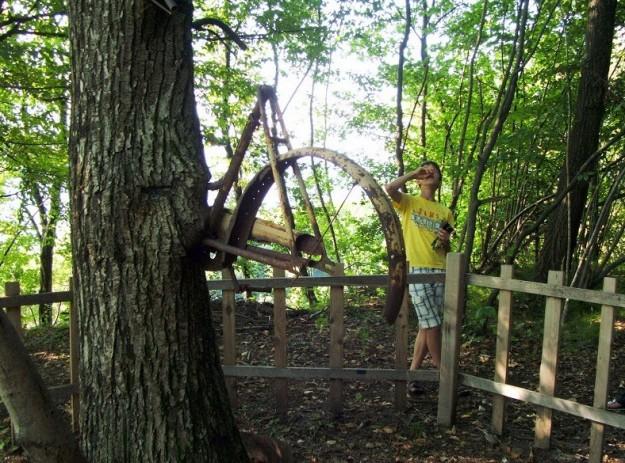 bici nell'albero caso italiano