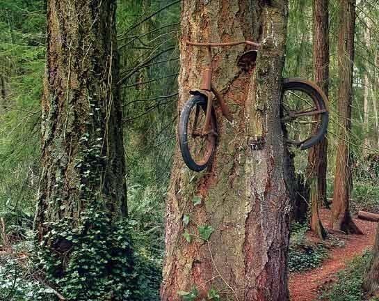 bici nell'albero