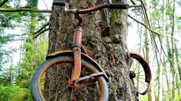 bici nell'albero usa