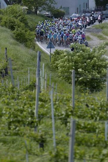 Giro d'Italia 2013, arrivo a Cherasco - 64