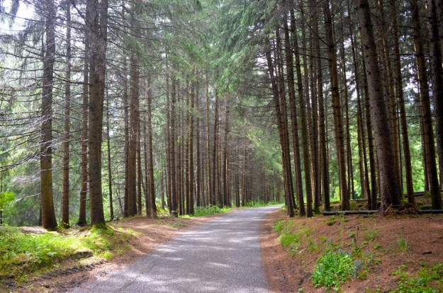 Scorcio nel bosco