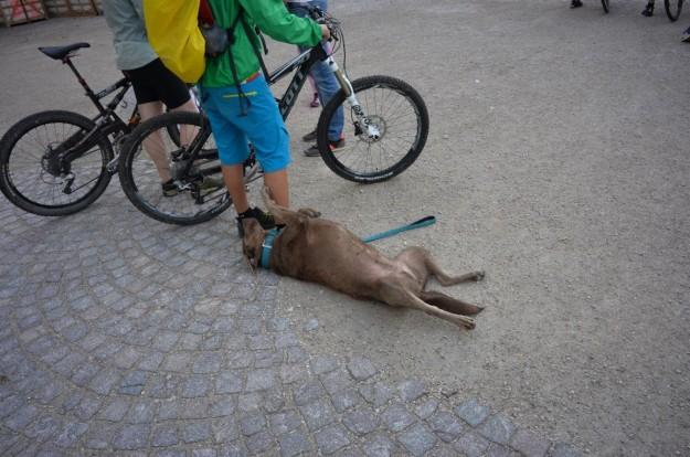 Cane simpatico a Brunico