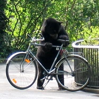 Ladri Di Biciclette Sbatti Ben Su Del Be Bop